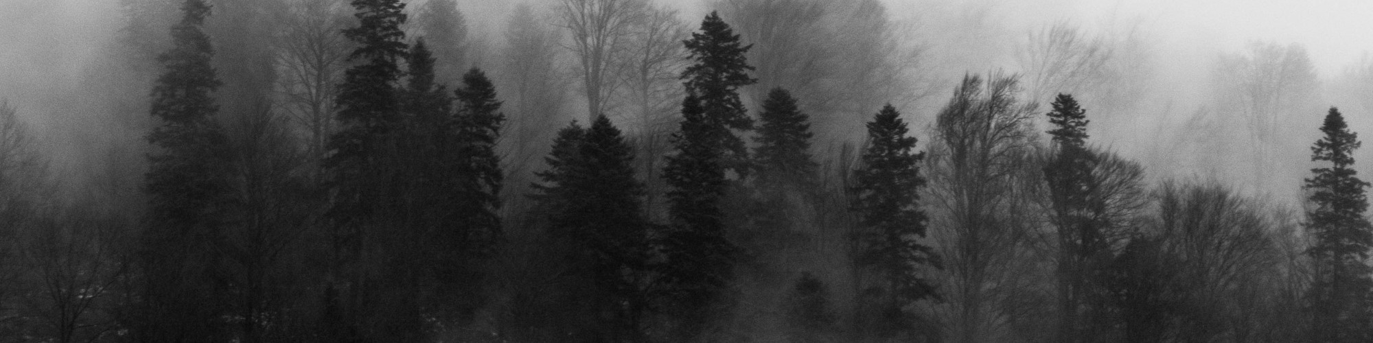 black-and-white-fog-foggy-1061623