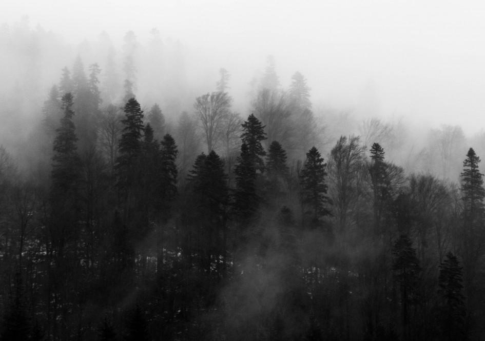 black-and-white-fog-foggy-1061623