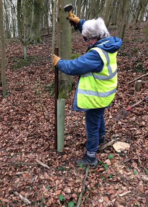 Lancashire Wildlife Trust Chatburn planting 2 (1)
