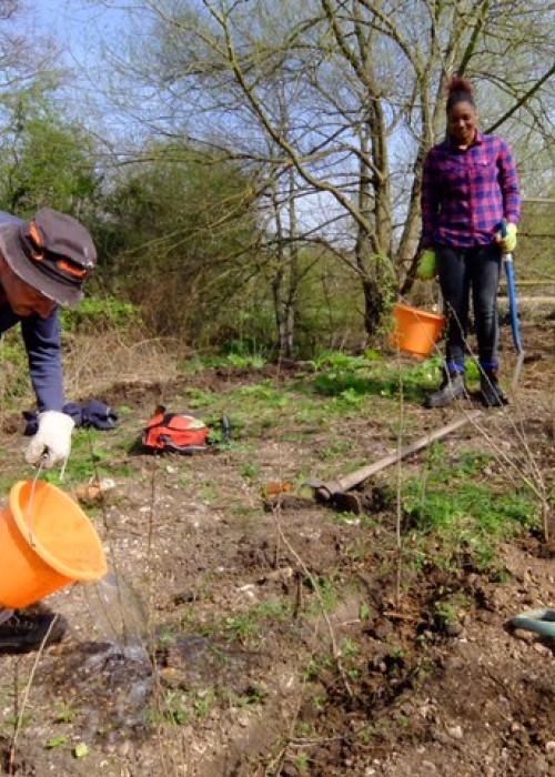 London Wildlife Trust Crane Meadows hedgerow planting 2 (1)