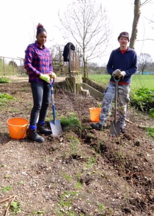 London Wildlife Trust Crane Meadows hedgerow planting 3 (1)