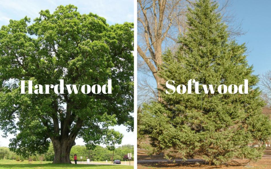 Hardwood And Softwood Trees ~ What s the difference between hardwood and softwood