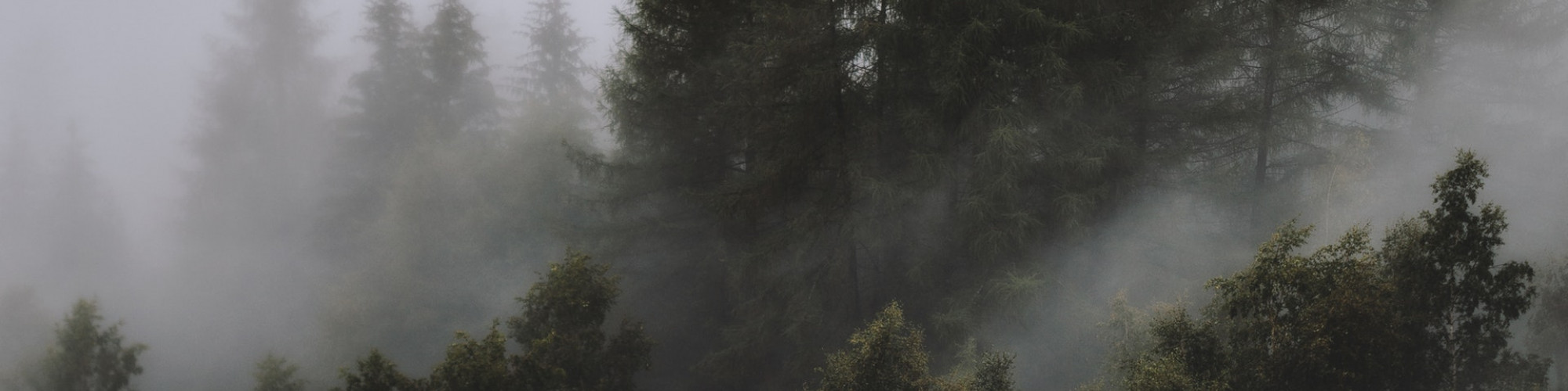 photo-of-foggy-forest-1367192